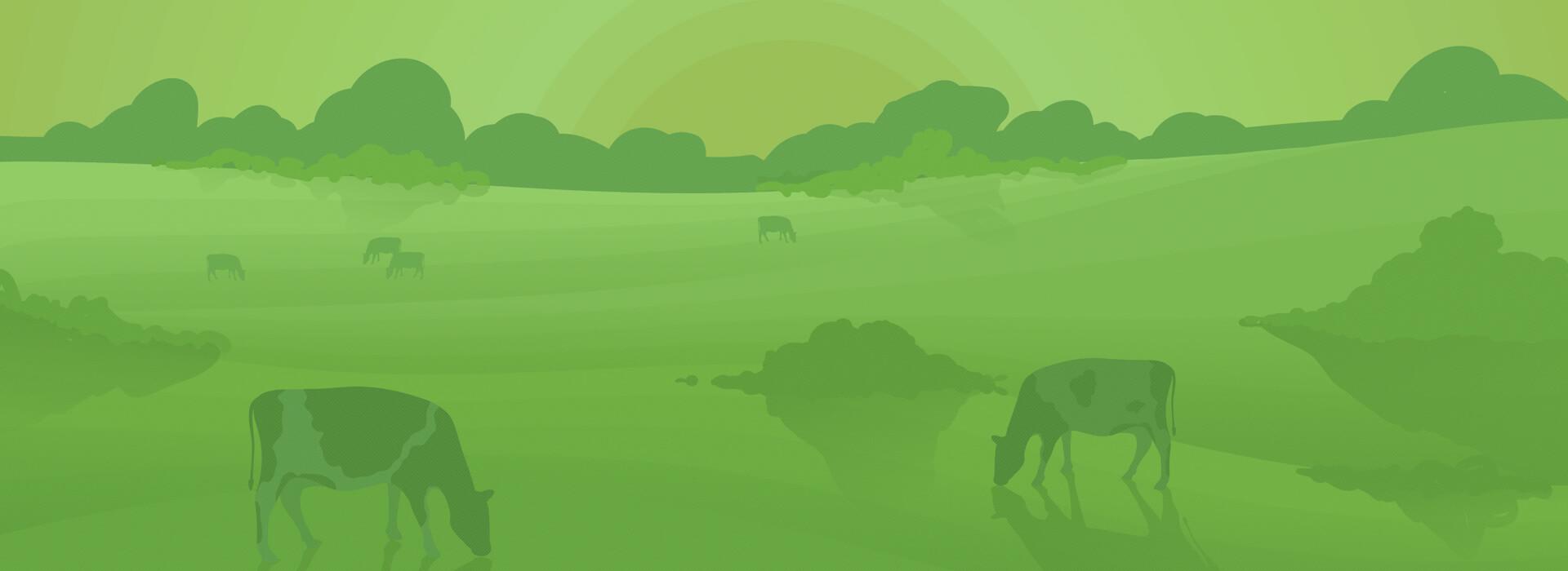 Farm Fresh Cow Milk